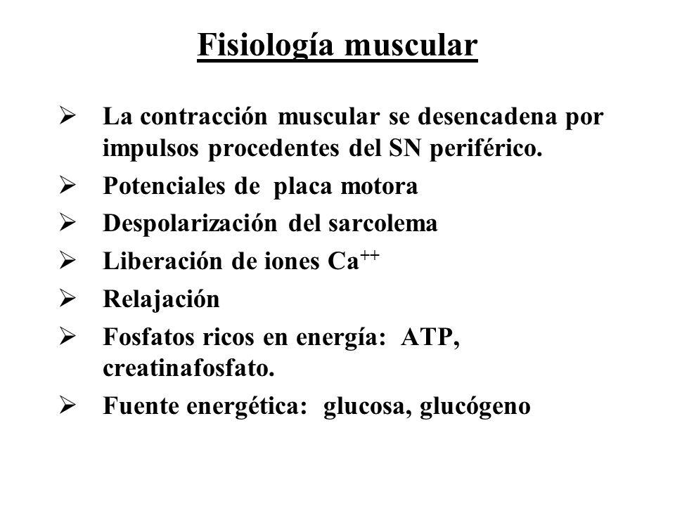 Fisiología muscular La contracción muscular se desencadena por impulsos procedentes del SN periférico. Potenciales de placa motora Despolarización del