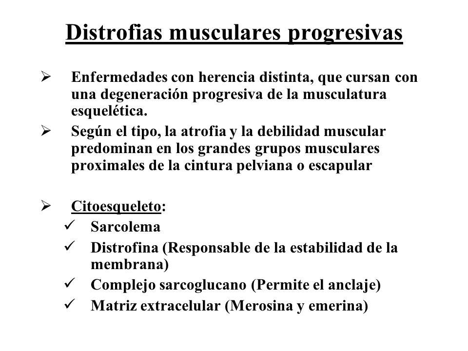 Distrofias musculares progresivas Enfermedades con herencia distinta, que cursan con una degeneración progresiva de la musculatura esquelética. Según