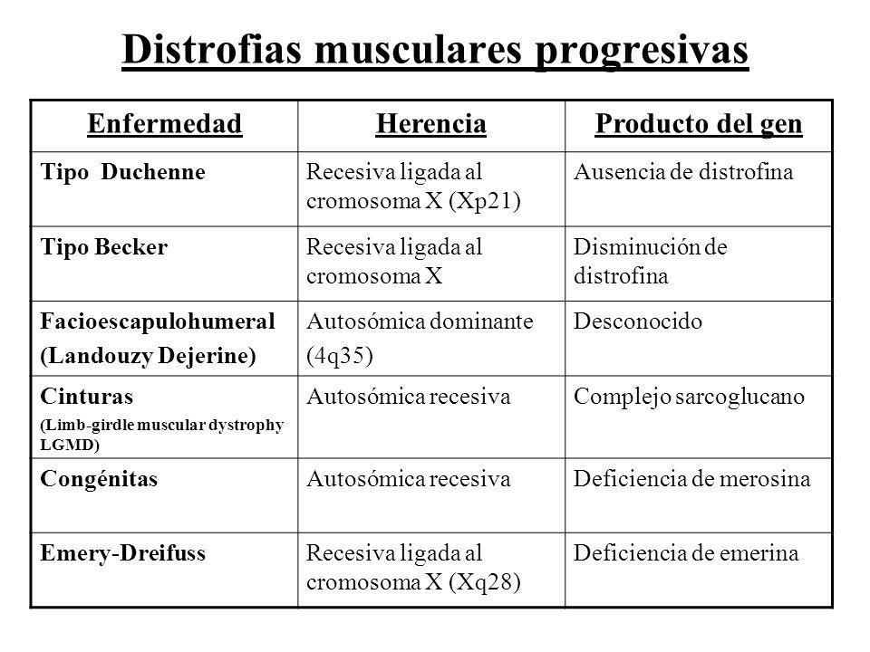 EnfermedadHerenciaProducto del gen Tipo DuchenneRecesiva ligada al cromosoma X (Xp21) Ausencia de distrofina Tipo BeckerRecesiva ligada al cromosoma X