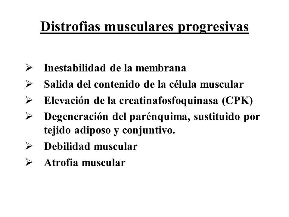 Distrofias musculares progresivas Inestabilidad de la membrana Salida del contenido de la célula muscular Elevación de la creatinafosfoquinasa (CPK) D