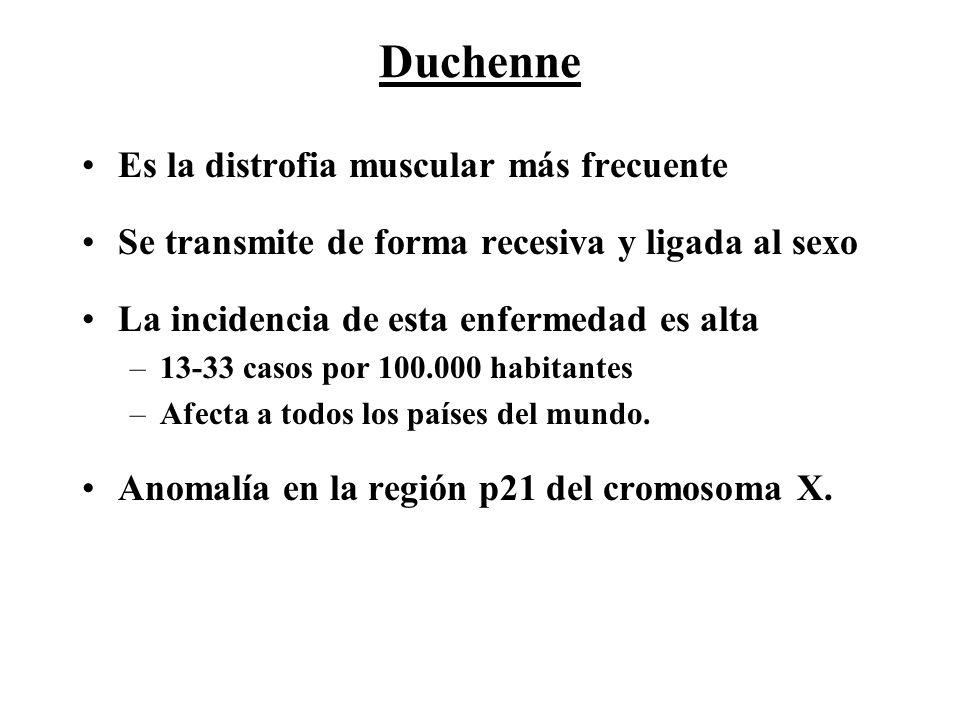 Duchenne Es la distrofia muscular más frecuente Se transmite de forma recesiva y ligada al sexo La incidencia de esta enfermedad es alta –13-33 casos