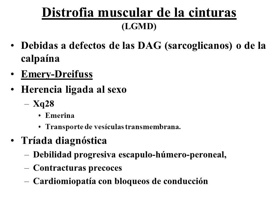 Debidas a defectos de las DAG (sarcoglicanos) o de la calpaína Emery-Dreifuss Herencia ligada al sexo –Xq28 Emerina Transporte de vesículas transmembr