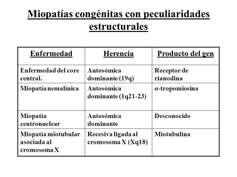 EnfermedadHerenciaProducto del gen Enfermedad del core central. Autosómica dominante (19q) Receptor de rianodina Miopatía nemalínicaAutosómica dominan