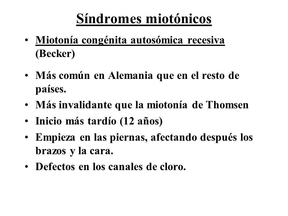 Síndromes miotónicos Miotonía congénita autosómica recesiva (Becker) Más común en Alemania que en el resto de países. Más invalidante que la miotonía