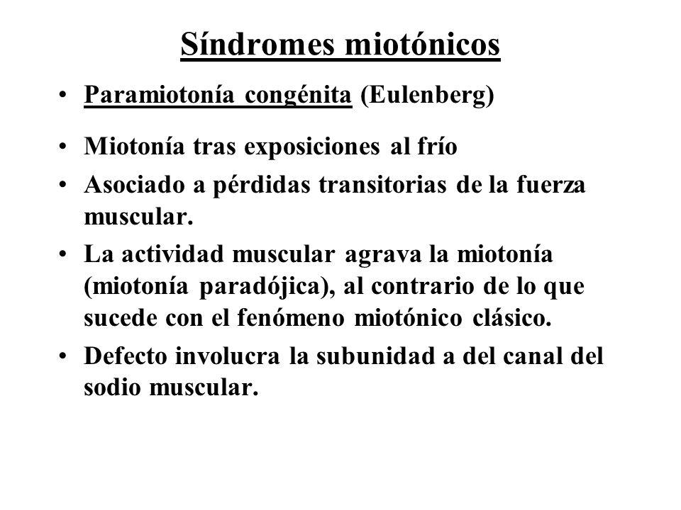 Síndromes miotónicos Paramiotonía congénita (Eulenberg) Miotonía tras exposiciones al frío Asociado a pérdidas transitorias de la fuerza muscular. La