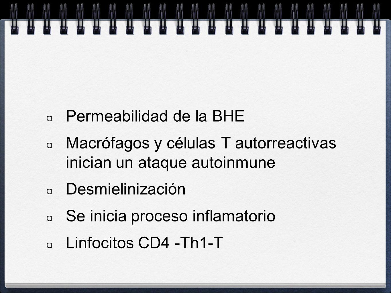 Permeabilidad de la BHE Macrófagos y células T autorreactivas inician un ataque autoinmune Desmielinización Se inicia proceso inflamatorio Linfocitos