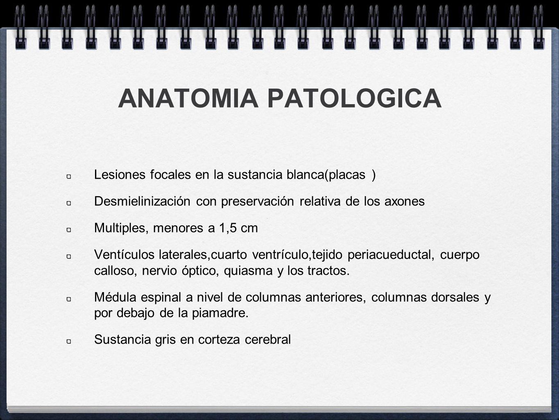 ANATOMIA PATOLOGICA Lesiones focales en la sustancia blanca(placas ) Desmielinización con preservación relativa de los axones Multiples, menores a 1,5