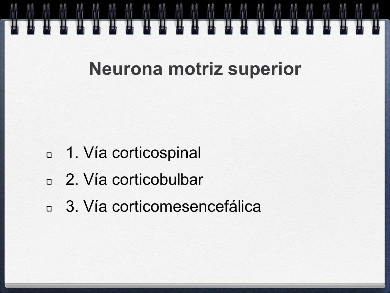 Neurona motriz superior 1. Vía corticospinal 2. Vía corticobulbar 3. Vía corticomesencefálica