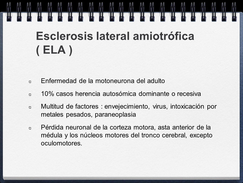 ELA Atrofia neuronal se acompaña de: Gliosis Neuronofagia Esferoides axonales en las raíces motoras Pérdida de axones motores Desmielinización de la vía piramidal de predominio distal ( fenómeno de dying back )