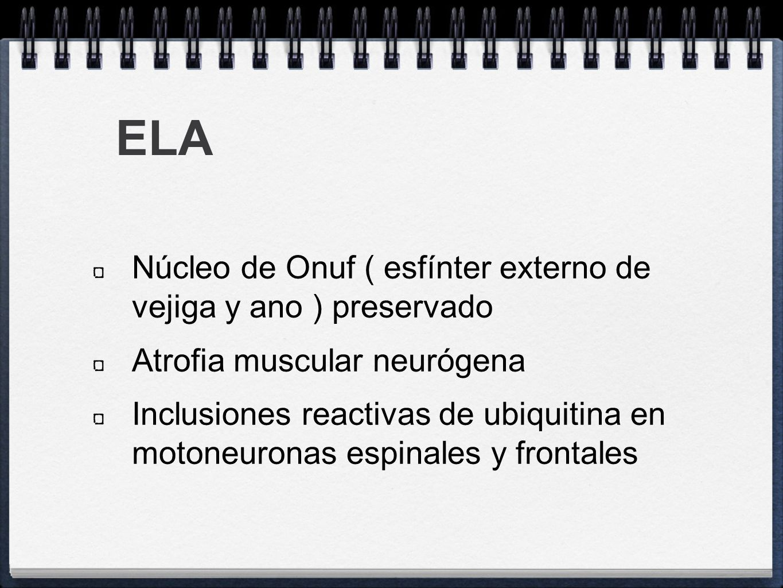 ELA Núcleo de Onuf ( esfínter externo de vejiga y ano ) preservado Atrofia muscular neurógena Inclusiones reactivas de ubiquitina en motoneuronas espi