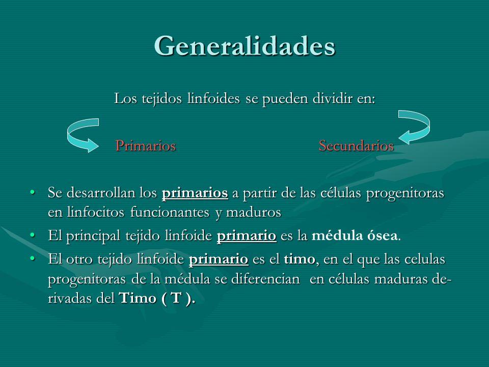 Generalidades Los tejidos linfoides se pueden dividir en: Primarios Secundarios Primarios Secundarios Se desarrollan los primarios a partir de las cél