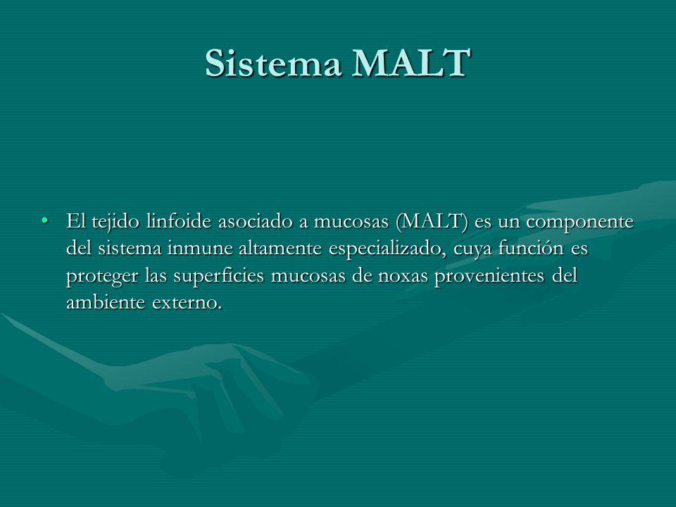 Sistema MALT Se divide en cuatro compartimentos, de los cuales el más importante lo constituyen los nódulos linfoides distribuidos a lo largo del intestino y que en el íleon terminal conforman las placas de Peyer; los otros compartimentos lo conforman los linfocitos de la lámina propia, los linfocitos y células plasmáticas intraepiteliales, y el cuarto compartimento corresponde a los linfonodos mesentéricos.Se divide en cuatro compartimentos, de los cuales el más importante lo constituyen los nódulos linfoides distribuidos a lo largo del intestino y que en el íleon terminal conforman las placas de Peyer; los otros compartimentos lo conforman los linfocitos de la lámina propia, los linfocitos y células plasmáticas intraepiteliales, y el cuarto compartimento corresponde a los linfonodos mesentéricos.
