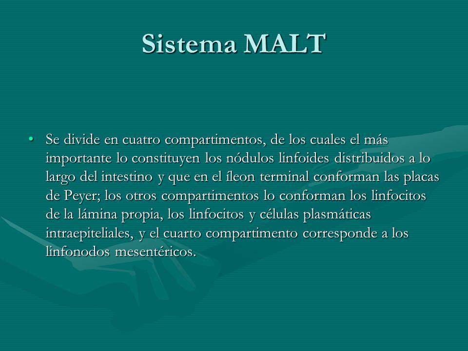 Sistema MALT Se divide en cuatro compartimentos, de los cuales el más importante lo constituyen los nódulos linfoides distribuidos a lo largo del inte