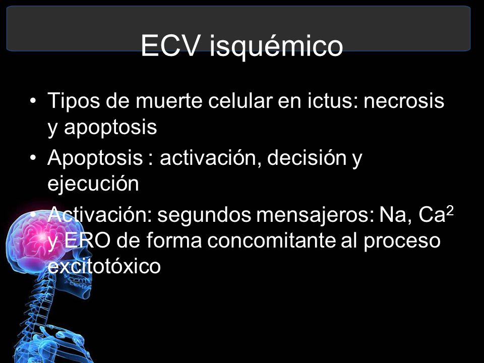 ECV isquémico Tipos de muerte celular en ictus: necrosis y apoptosis Apoptosis : activación, decisión y ejecución Activación: segundos mensajeros: Na,
