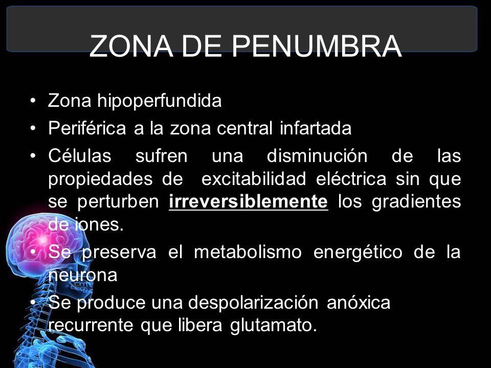 ZONA DE PENUMBRA Zona hipoperfundida Periférica a la zona central infartada Células sufren una disminución de las propiedades de excitabilidad eléctri