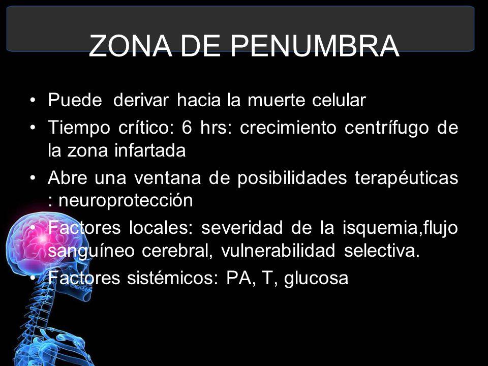 ZONA DE PENUMBRA Puede derivar hacia la muerte celular Tiempo crítico: 6 hrs: crecimiento centrífugo de la zona infartada Abre una ventana de posibili