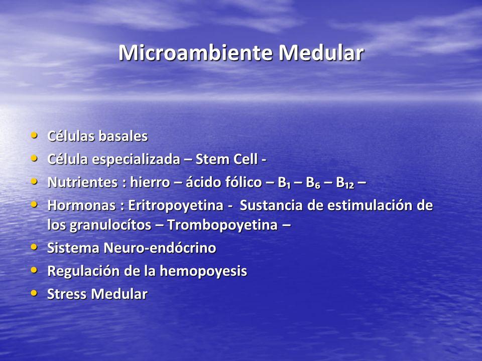Microambiente Medular Células basales Células basales Célula especializada – Stem Cell - Célula especializada – Stem Cell - Nutrientes : hierro – ácid