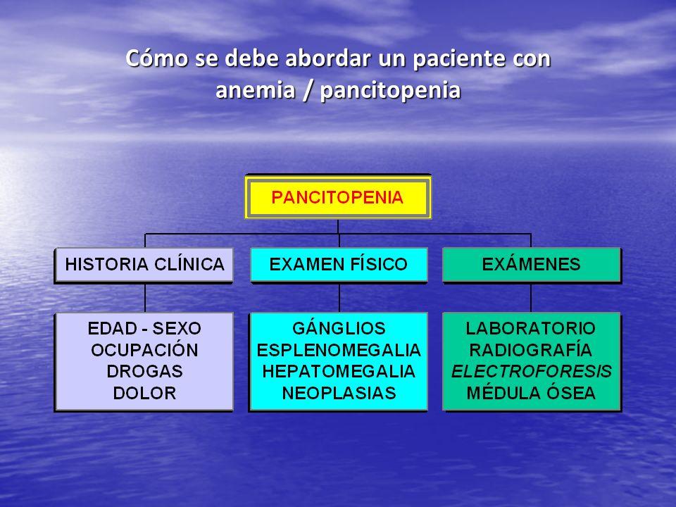 Cómo se debe abordar un paciente con anemia / pancitopenia