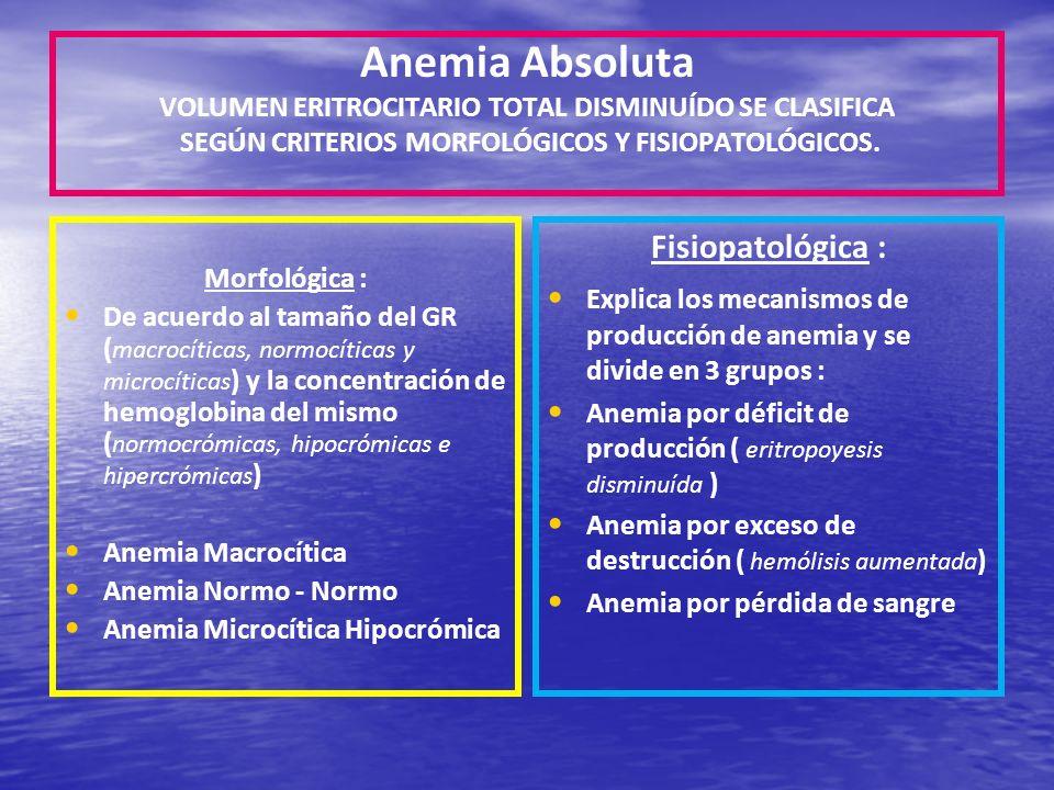 Anemia Absoluta VOLUMEN ERITROCITARIO TOTAL DISMINUÍDO SE CLASIFICA SEGÚN CRITERIOS MORFOLÓGICOS Y FISIOPATOLÓGICOS. Morfológica : De acuerdo al tamañ