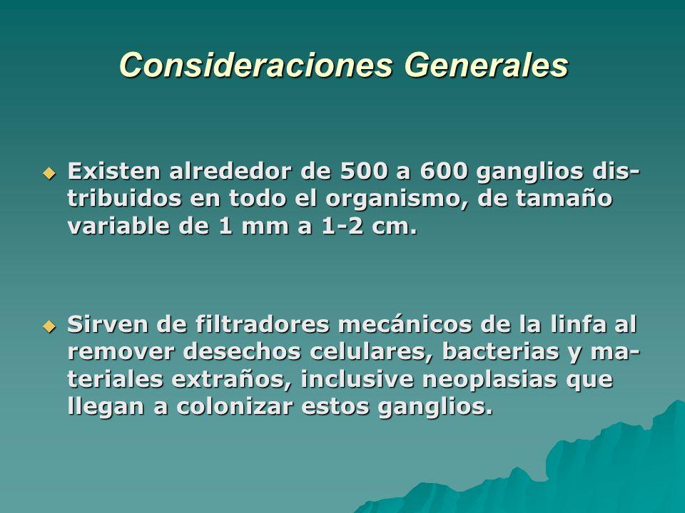 Consideraciones Generales Existen alrededor de 500 a 600 ganglios dis- tribuidos en todo el organismo, de tamaño variable de 1 mm a 1-2 cm. Existen al