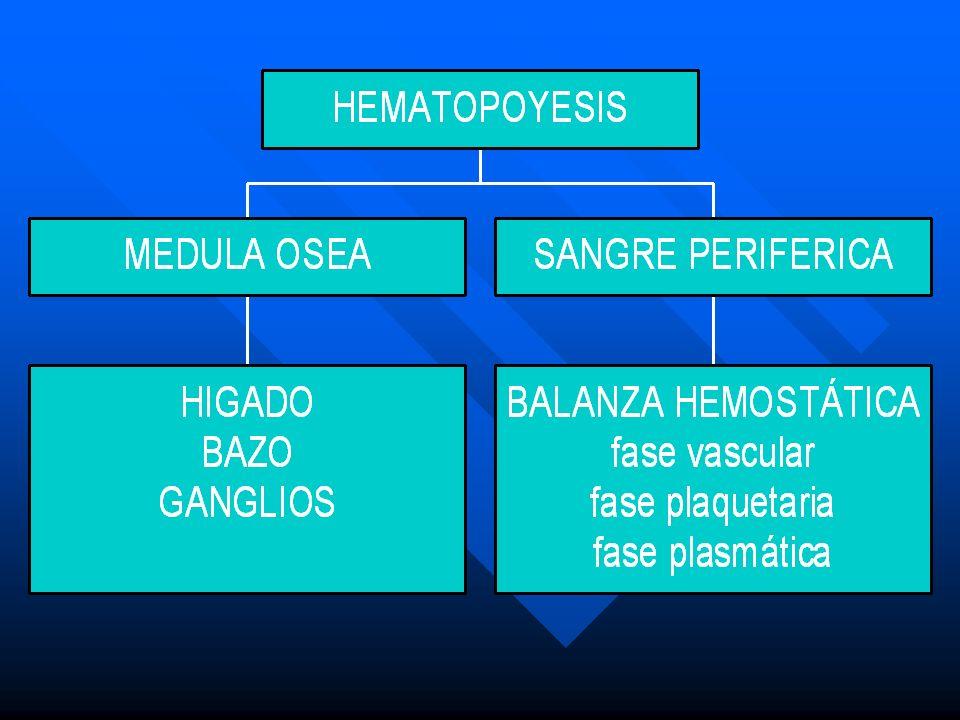 Estroma Este complejo funcional está constituido por fibroblastos, células reticulares que probablemente corresponden a pre- osteoblastos, osteoclastos y células endoteliales, así como por linfocitos, monocitos/macrófagos y células mesenqui- matosas.