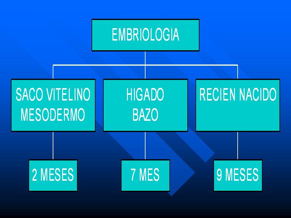 Modelo de Hematopoyesis Dentro del compartimiento pluripotencial, se encuentran aquellas células que aún no eligen un linaje ( estirpe ) de- terminado ( irrestrictas ), la CTH, identificada en cultivo por la UFC de blastos ( BL ) y las células que se compro- meten, adquiriendo así capacidad para diferenciarse hacia una línea celular hematopoyética definida Dentro del compartimiento pluripotencial, se encuentran aquellas células que aún no eligen un linaje ( estirpe ) de- terminado ( irrestrictas ), la CTH, identificada en cultivo por la UFC de blastos ( BL ) y las células que se compro- meten, adquiriendo así capacidad para diferenciarse hacia una línea celular hematopoyética definida