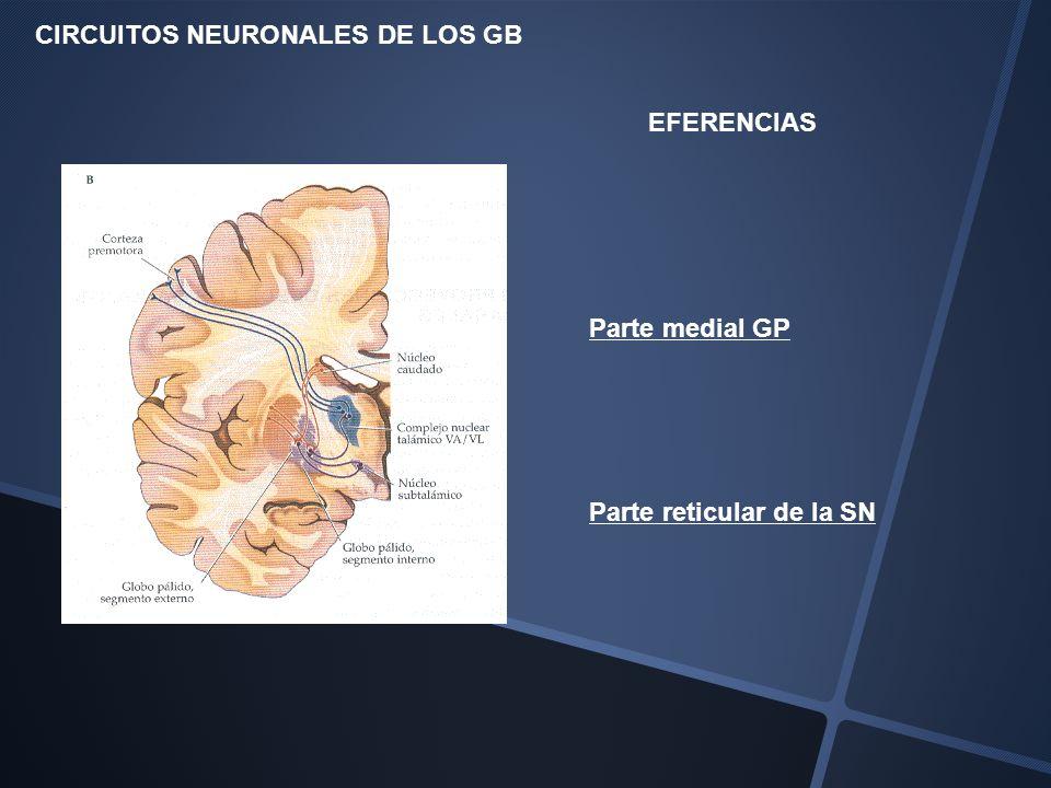 Parte medial GP CIRCUITOS NEURONALES DE LOS GB EFERENCIAS Parte reticular de la SN