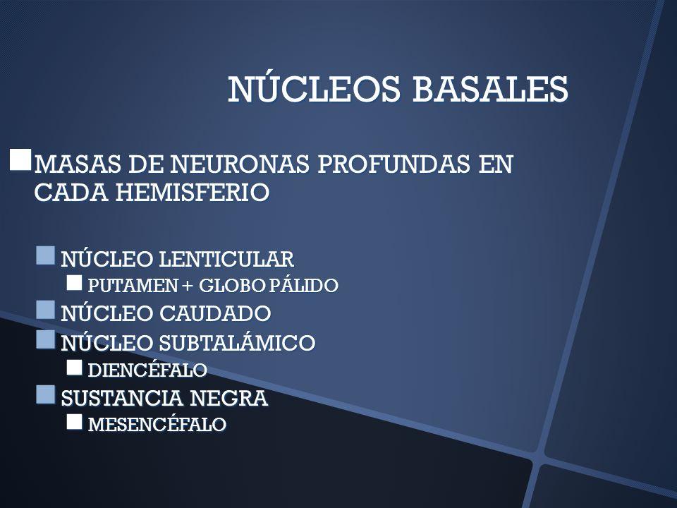 NÚCLEOS BASALES MASAS DE NEURONAS PROFUNDAS EN CADA HEMISFERIO MASAS DE NEURONAS PROFUNDAS EN CADA HEMISFERIO NÚCLEO LENTICULAR NÚCLEO LENTICULAR PUTA