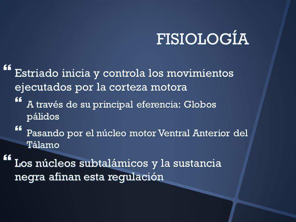 FISIOLOGÍA Estriado inicia y controla los movimientos ejecutados por la corteza motora Estriado inicia y controla los movimientos ejecutados por la co