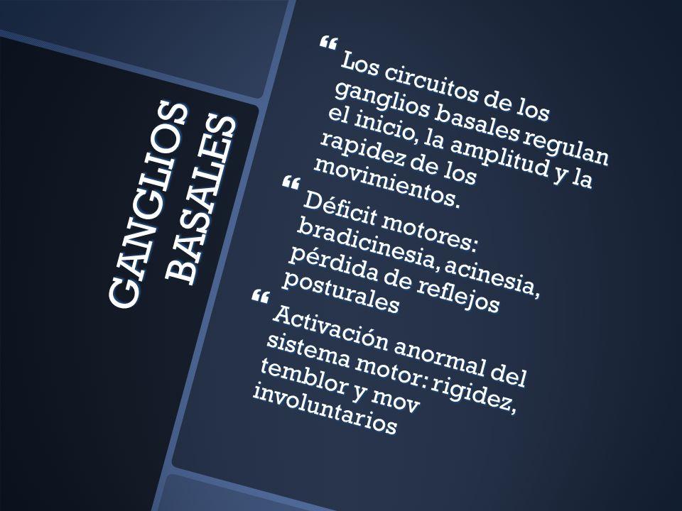 GANGLIOS BASALES Los circuitos de los ganglios basales regulan el inicio, la amplitud y la rapidez de los movimientos. Los circuitos de los ganglios b