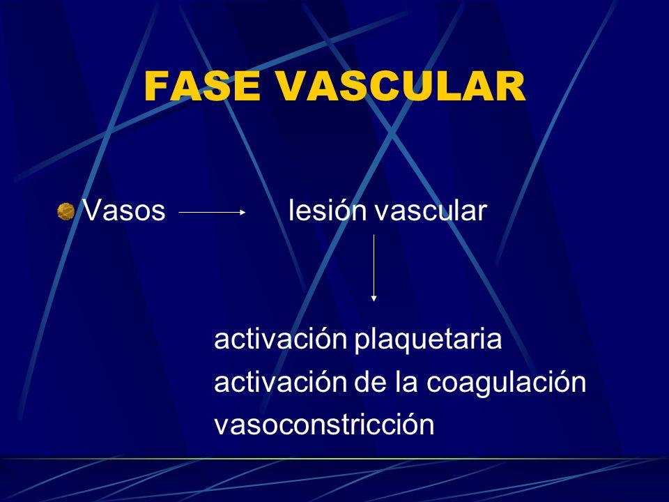 FASE VASCULAR Vasos lesión vascular activación plaquetaria activación de la coagulación vasoconstricción