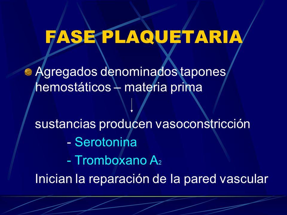 FASE PLAQUETARIA Agregados denominados tapones hemostáticos – materia prima sustancias producen vasoconstricción - Serotonina - Tromboxano A 2 Inician
