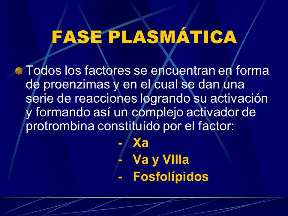 FASE PLASMÁTICA Todos los factores se encuentran en forma de proenzimas y en el cual se dan una serie de reacciones logrando su activación y formando