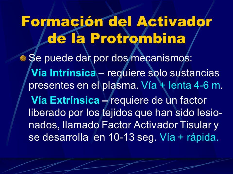 Formación del Activador de la Protrombina Se puede dar por dos mecanismos: Vía Intrínsica – requiere solo sustancias presentes en el plasma. Vía + len
