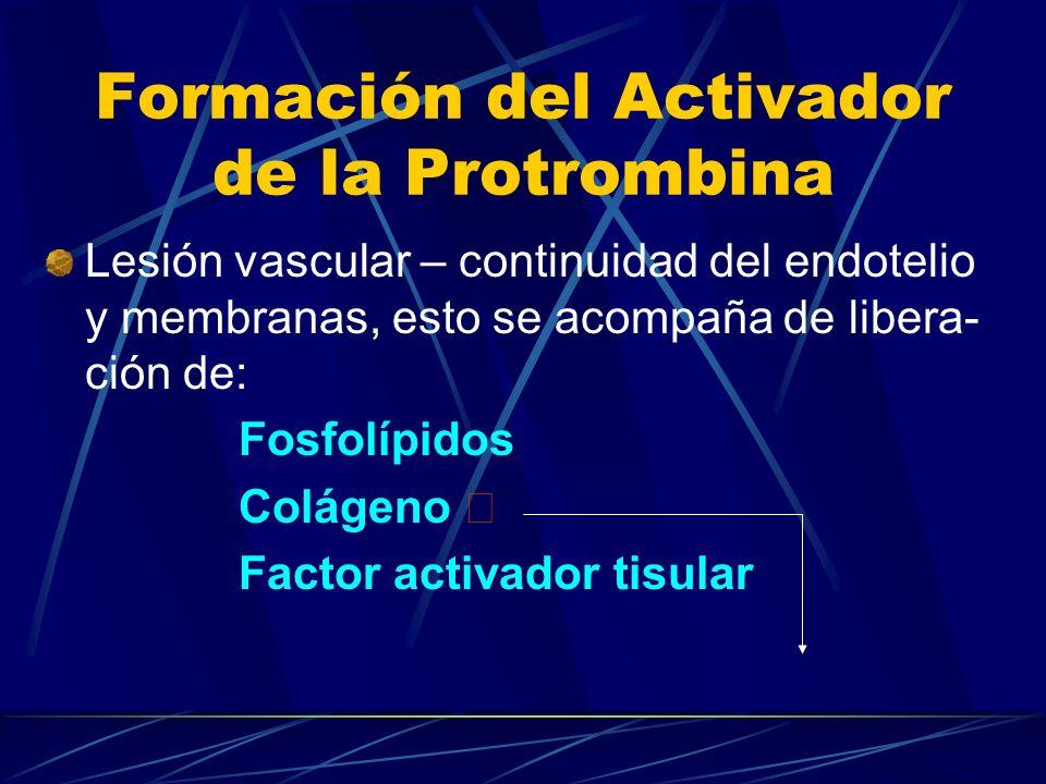Formación del Activador de la Protrombina Lesión vascular – continuidad del endotelio y membranas, esto se acompaña de libera- ción de: Fosfolípidos C