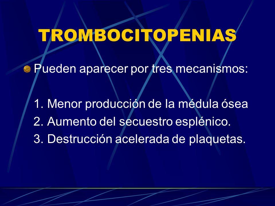 TROMBOCITOPENIAS Pueden aparecer por tres mecanismos: 1. Menor producción de la médula ósea 2. Aumento del secuestro esplénico. 3. Destrucción acelera