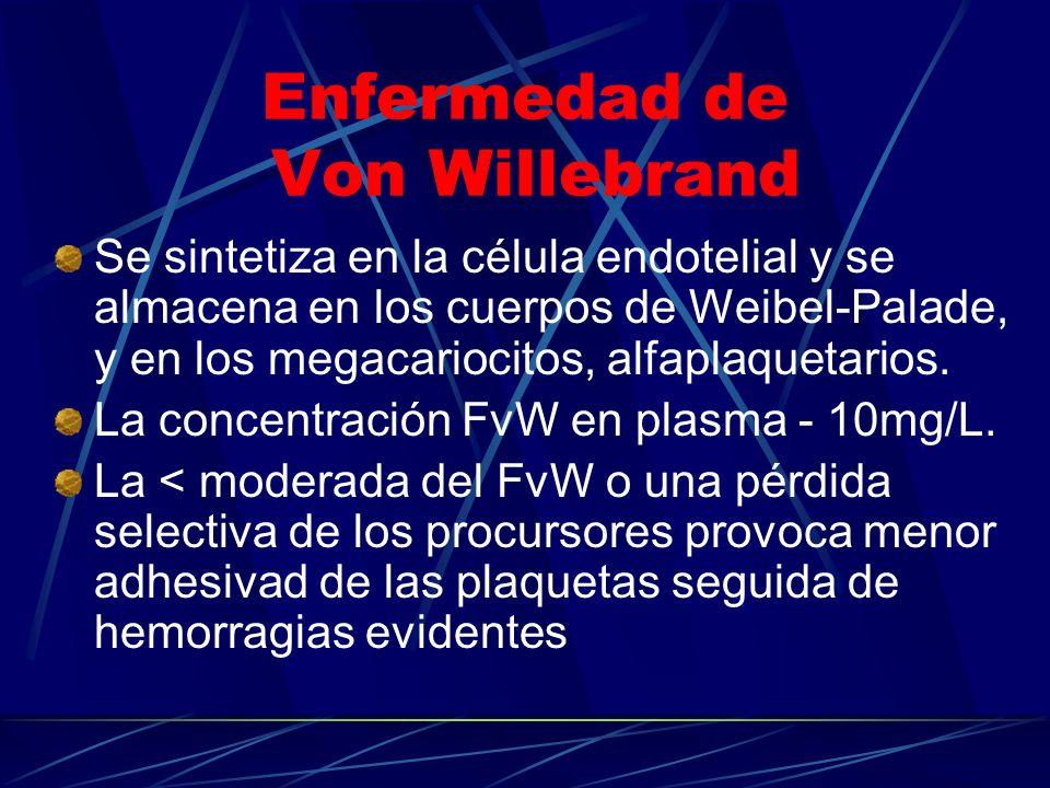 Enfermedad de Von Willebrand Se sintetiza en la célula endotelial y se almacena en los cuerpos de Weibel-Palade, y en los megacariocitos, alfaplaqueta