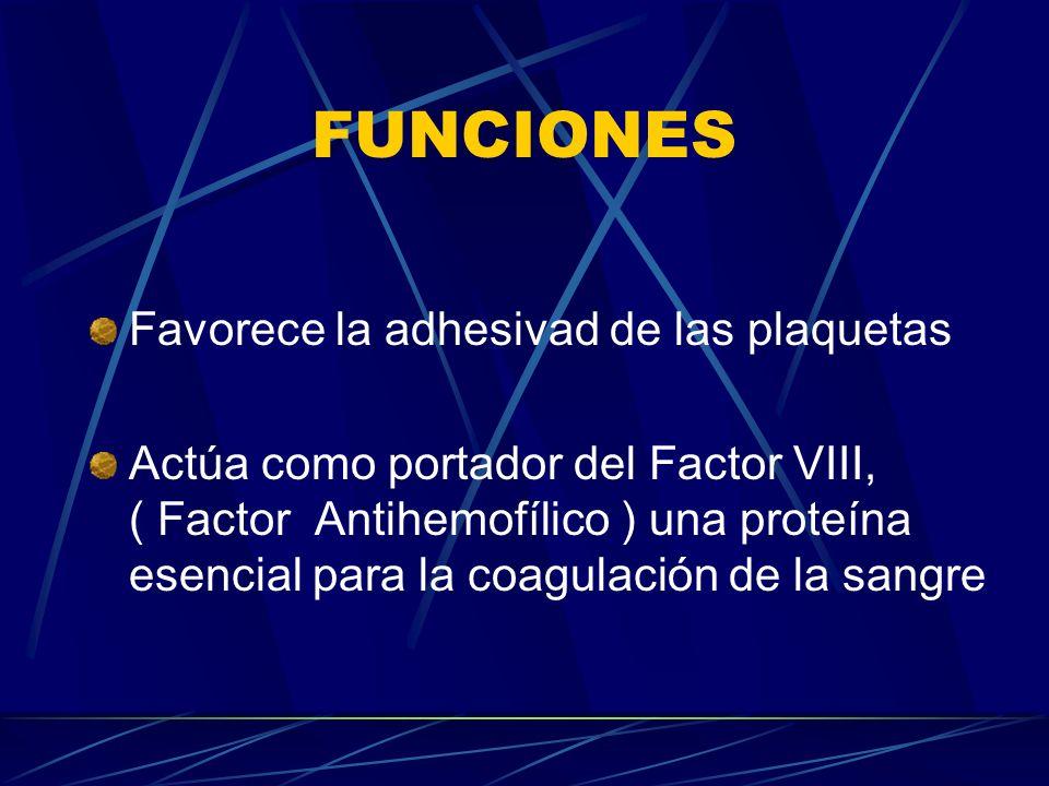 FUNCIONES Favorece la adhesivad de las plaquetas Actúa como portador del Factor VIII, ( Factor Antihemofílico ) una proteína esencial para la coagulac