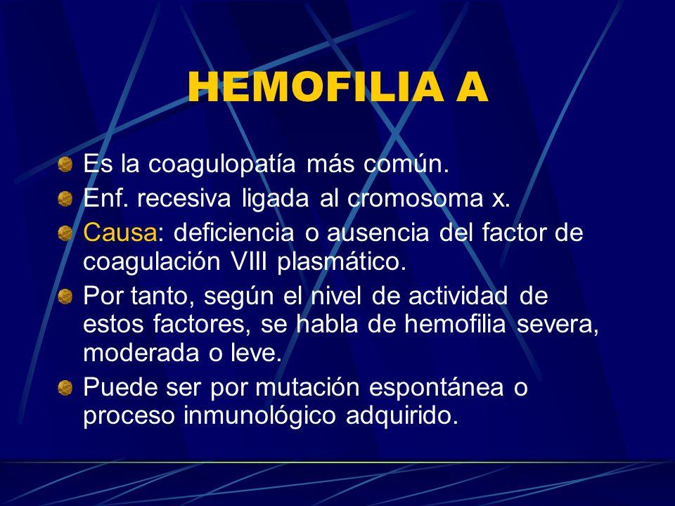 HEMOFILIA A Es la coagulopatía más común. Enf. recesiva ligada al cromosoma x. Causa: deficiencia o ausencia del factor de coagulación VIII plasmático