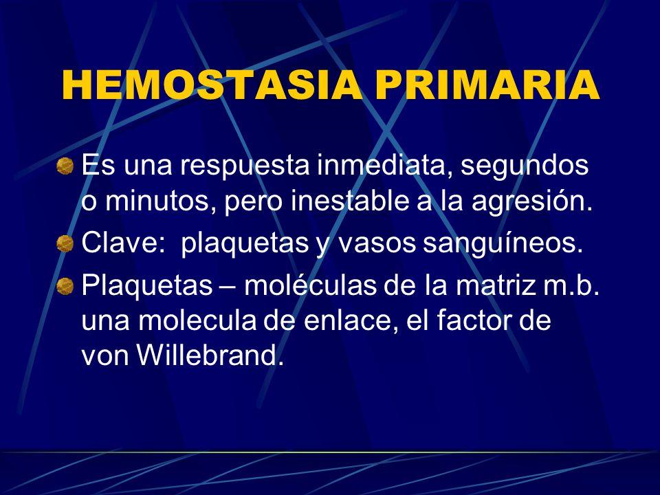 HEMOSTASIA PRIMARIA Es una respuesta inmediata, segundos o minutos, pero inestable a la agresión. Clave: plaquetas y vasos sanguíneos. Plaquetas – mol