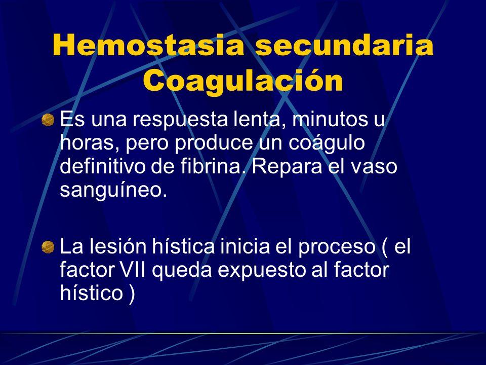 Hemostasia secundaria Coagulación Es una respuesta lenta, minutos u horas, pero produce un coágulo definitivo de fibrina. Repara el vaso sanguíneo. La