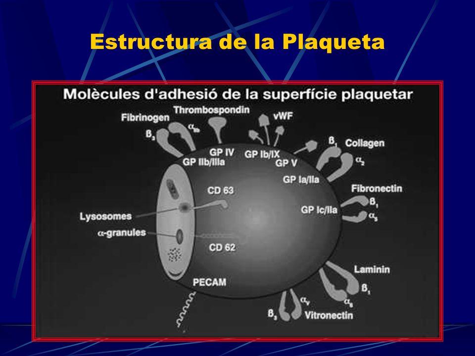 Estructura de la Plaqueta