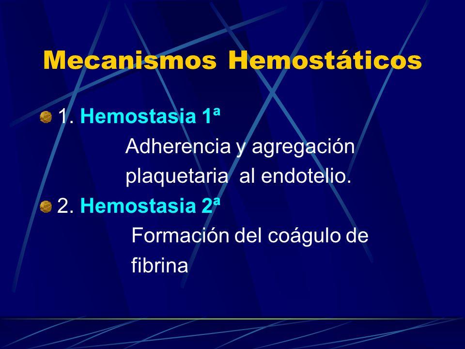 Mecanismos Hemostáticos 1. Hemostasia 1ª Adherencia y agregación plaquetaria al endotelio. 2. Hemostasia 2ª Formación del coágulo de fibrina
