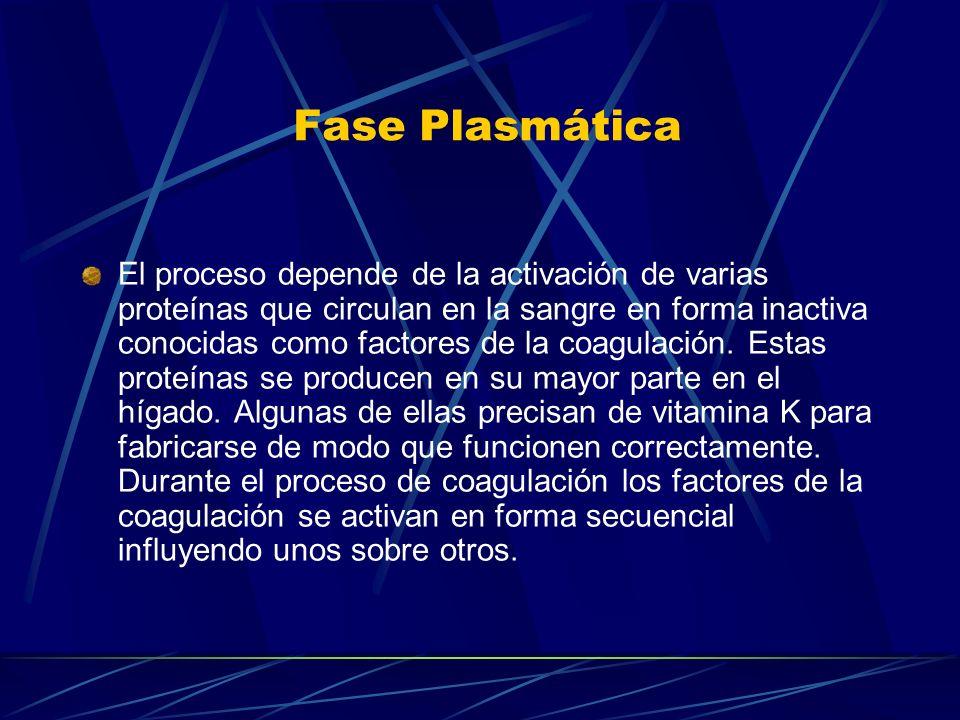Fase Plasmática El proceso depende de la activación de varias proteínas que circulan en la sangre en forma inactiva conocidas como factores de la coag