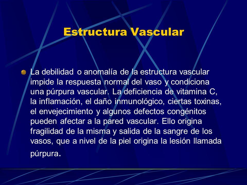 Estructura Vascular La debilidad o anomalía de la estructura vascular impide la respuesta normal del vaso y condiciona una púrpura vascular. La defici