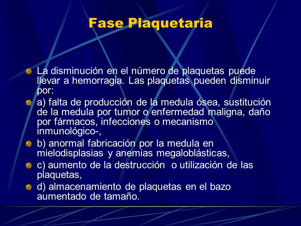 Fase Plaquetaria La disminución en el número de plaquetas puede llevar a hemorragia. Las plaquetas pueden disminuir por: a) falta de producción de la