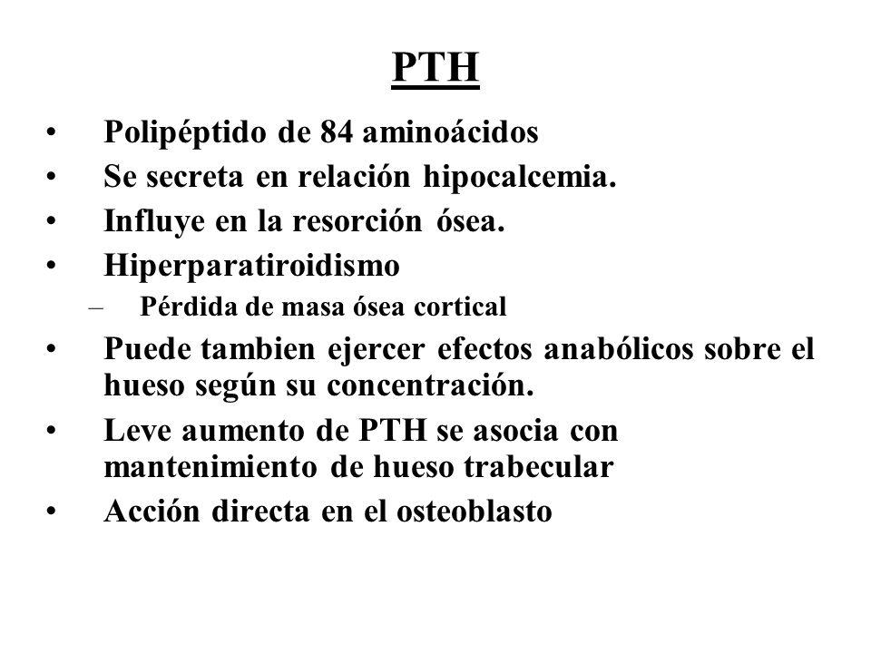 PTH Polipéptido de 84 aminoácidos Se secreta en relación hipocalcemia. Influye en la resorción ósea. Hiperparatiroidismo –Pérdida de masa ósea cortica