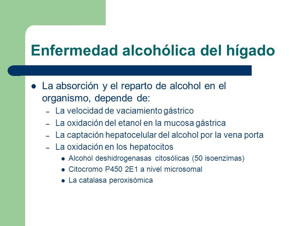 Enfermedad alcohólica del hígado La absorción y el reparto de alcohol en el organismo, depende de: – La velocidad de vaciamiento gástrico – La oxidaci
