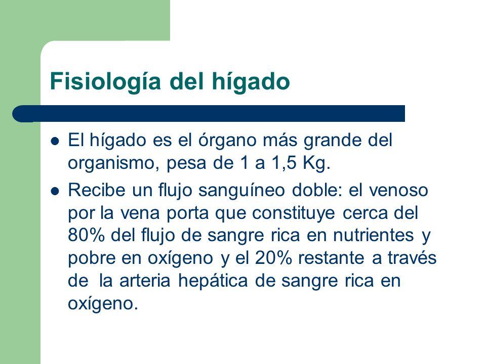 Fisiologia del hígado Homeostasis de la glucosa y el glucógeno Síntesis de proteínas plasmáticas Síntesis de lípidos y lipoproteínas Síntesis de hormonas y factores de crecimiento Regula el colesterol plasmático Síntesis y secreción de ácidos biliares Captación, conjugación y excreción de la bilirrubina Depósito de vitaminas A, D, E, K y B12 Factores de la coagulación K dependientes Biotransformación, detoxicación y excreción de una gran variedad de compuestos endógenos y exógenos