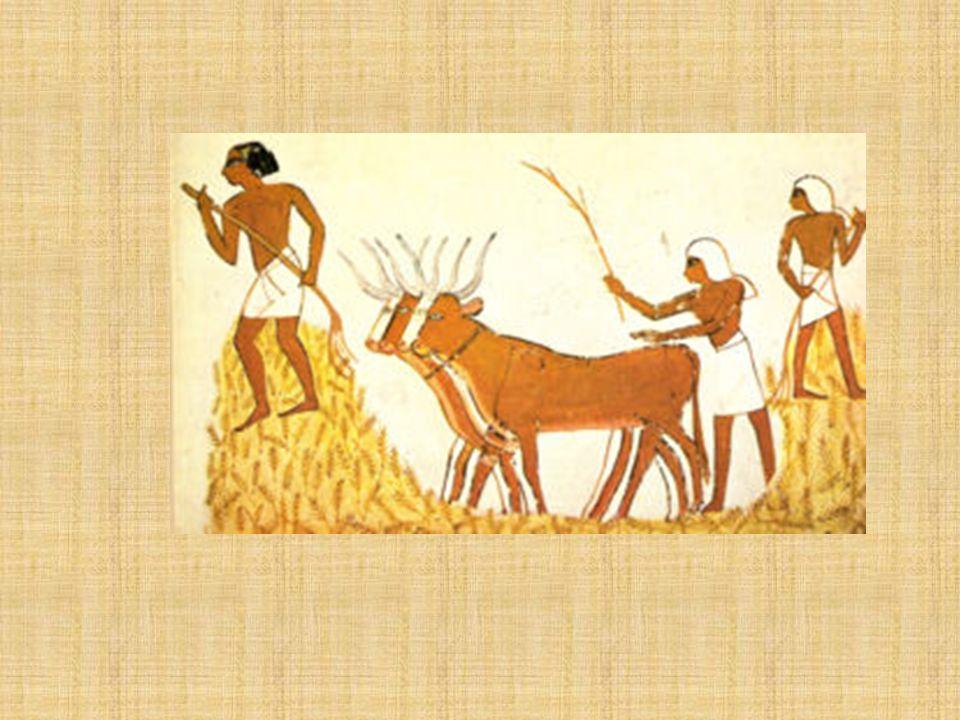 Economía La civilización egipcia fue esencialmente agrícola. La agricultura fue la actividad ejercida por la mayoría de la población; su práctica perm
